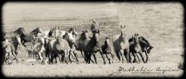 nhupin-chevaux--70