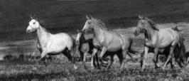 nhupin-chevaux--71