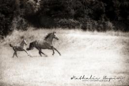 nhupin-chevaux--72