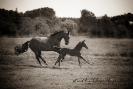 nhupin-chevaux--73