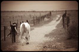 nhupin-chevaux-7573