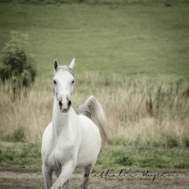 nhupin-chevaux-7688