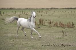 nhupin-chevaux-7769