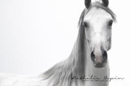 nhupin-chevaux-7829-2