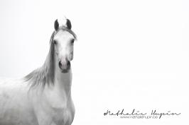 nhupin-chevaux-7829
