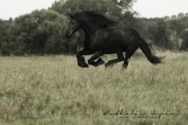 nhupin-chevaux--9
